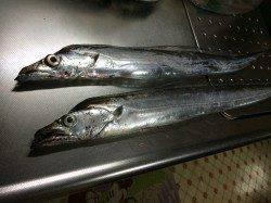 北港のタチウオ釣果〜遠投すると食ってきました