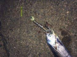 和歌山北港魚つり公園でタチウオ10本♪ 早めリトリーブが◎