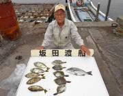 黒島の筏でチヌ・アイゴ・カワハギの釣果