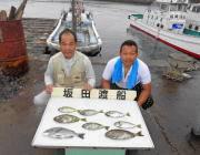 湾内の筏でチヌ・アイゴの釣果