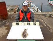 黒島の磯のアオリイカ エギは3.5号、4号を使用
