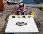 黒島の磯の底物釣果