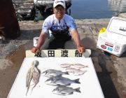 湾内の筏 チヌ3枚の釣果