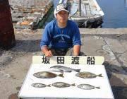 湾内の筏・黒島の筏でのチヌ・アイゴ釣果