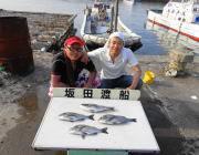 湾内の筏でのチヌ釣果