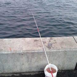 台風後の兵庫突堤〜タチウオ狙いはアタリなくサビキでサバの釣果
