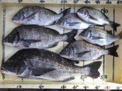 宮崎沖カセ釣果〜チヌ釣り前期もあと少しで終了です
