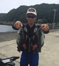 沖の赤島にてグレ7匹、良く釣れていました☆