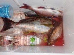 のこぎりでイサギ40cmなど 半夜&通しのカゴ釣り釣果です