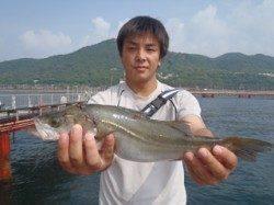 須磨海づり公園 シラサエビのウキ流し釣りでハネの釣果