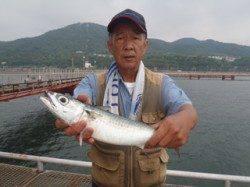 須磨海づり公園 大サバ43cmの釣果