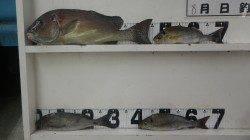 椿イセザキ フカセ釣りでコロダイ・イサギ