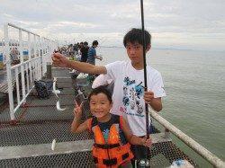 尼崎市魚つり公園 サビキのアジ・イワシは絶好調
