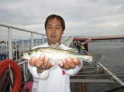 早朝7時までエビ撒きでハネ・セイゴ高活性 尼崎市立魚つり公園