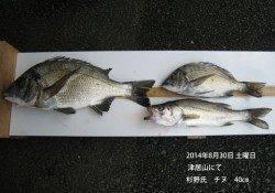 【30日】津居山にてチヌ40cm