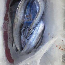 紀ノ川河口 アタリが少ない中貴重なタチウオ2本ゲット