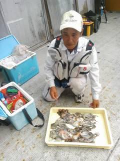 岸和田、旧の一文字でのタコ釣果