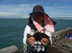 北港魚つり公園 グッドサイズのカワハギ釣れてます♪