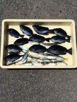 マリーナシティ海釣り公園 サビキで色々な魚種楽しめます