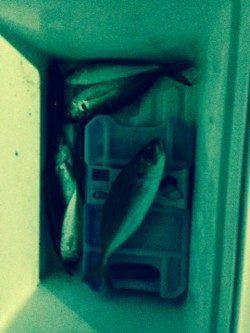 深日漁港周辺でのアジング〜カラーチェンジでアタリ続きました