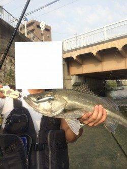 石津川河川 イナッコパターンでのシーバス楽しいです!
