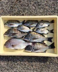 紀州釣りでチヌ&マダイ楽しめました♪ マリーナシティ海釣り公園