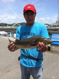 マリーナシティ海釣り公園 活きイワシのノマセでスズキ65cm