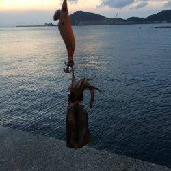 由良周辺漁港をランガン〜アオリイカ新子確認できました♪