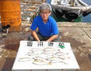 黒島の筏での釣果〜シラサでチャリコとシオ、オキアミでコロダイ