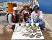 黒島の筏にてチヌ・マルアジ・アイゴの釣果