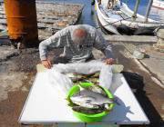 黒島の筏で良型チヌ5枚、湾内の筏ではアイゴの数釣り