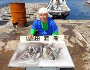 黒島の磯 アオリイカ新子〜0.6kgを12ハイ