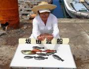 黒島の磯でアイゴ・グレの釣果