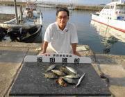 湾内の筏でアイゴの釣果