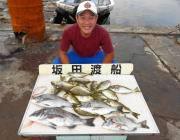 湾内の筏・黒島の筏でチヌ・アイゴ・マダイの釣果