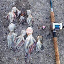 飾磨~広畑周辺でタコ狙い釣行〜8ハイの釣果