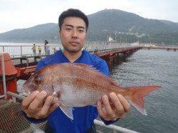 須磨海づり公園 ウキ流し釣りでマダイ37cm