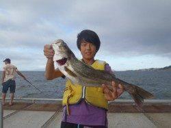 のませ釣りで良型ハネ! 須磨海づり公園
