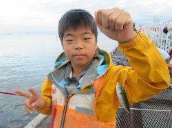 尼崎市魚つり公園 サビキのアジは朝方がオススメ