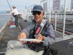 尼崎市立魚つり公園 サヨリ好調 32cm頭に80匹!