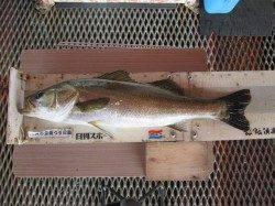 今日は風が弱くサヨリ釣りに好条件 尼崎市立魚つり公園