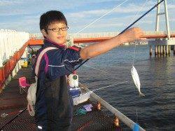 尼崎市魚つり公園 サッパ・サヨリ・サバ中心の釣果