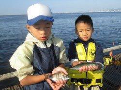 尼崎市魚つり公園 サビキはサッパ中心の釣果