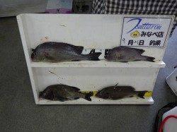 天神崎 フカセ釣りでチヌ・コロダイ・イサギの釣果