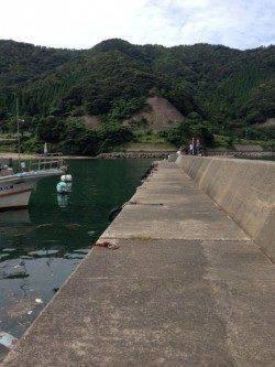 イカ&アジを狙いに小浜へ サビキでアジが多数釣れました