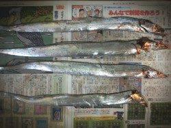 舞洲 サビキで小アジ大漁&ジグで中サバ&ワインドでタチウオ