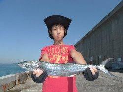 お見事!北港魚つり公園で立派なサゴシ
