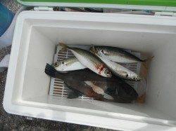 和歌山北港魚つり公園 紀州釣りでチヌ・アイゴ・アコウ