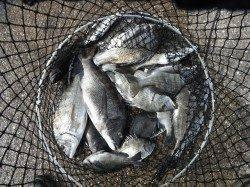 和歌山北港魚つり公園 紀州釣りでチヌ好調でした☆