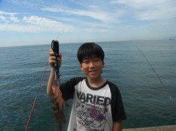 北港釣り公園 タチウオ&アコウの釣果